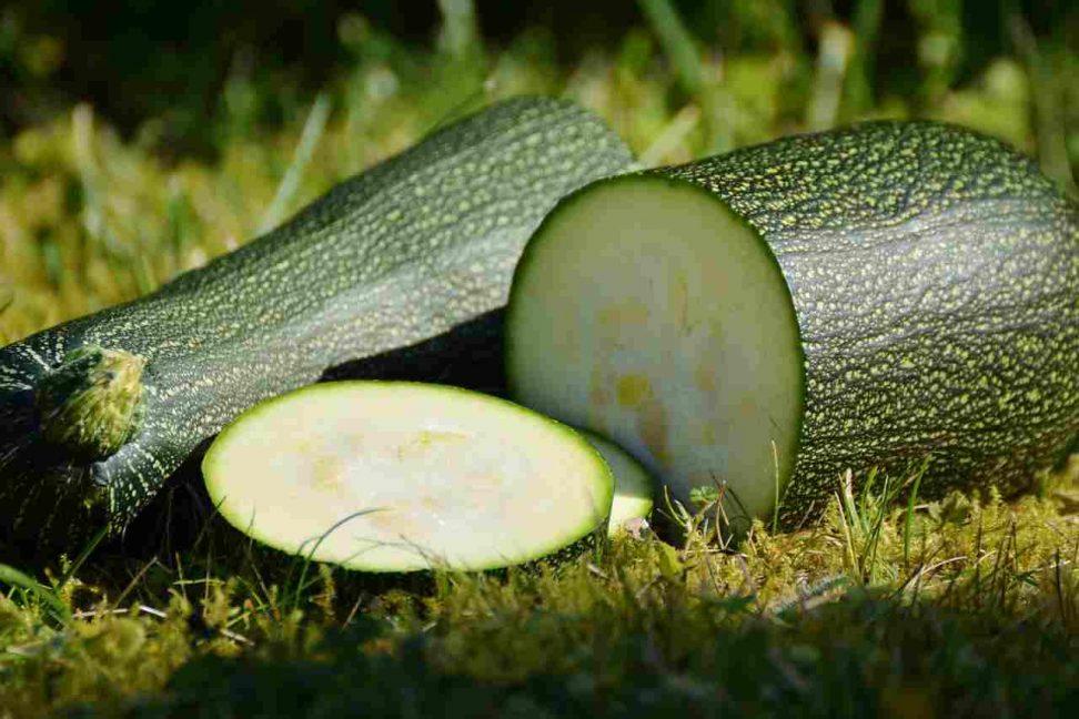 Zucchini dörren